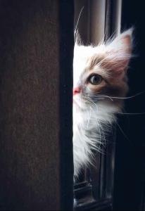 cat intermission